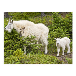 Canada, Alberta, Jasper National Park, Mountain 2 Postcard