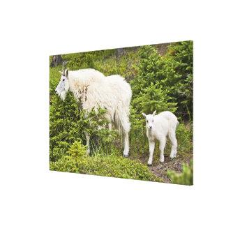 Canada, Alberta, Jasper National Park, Mountain 2 Stretched Canvas Prints