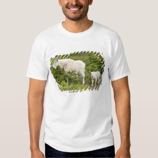 Canada, Alberta, Jasper National Park, Mountain 2 T Shirts