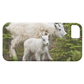 Canada, Alberta, Jasper National Park, Mountain iPhone 5 Covers