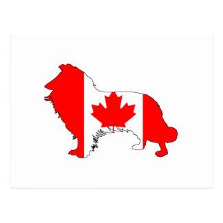 Canada Border Collie Postcard