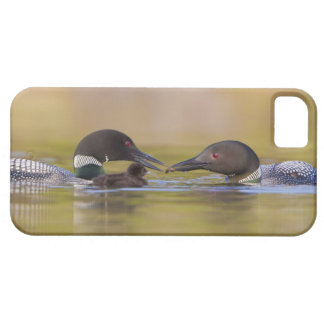 Canada, British Columbia,Common Loon, breeding iPhone 5 Covers