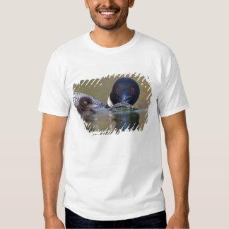 Canada, British Columbia,Common Loon, breeding T-shirt