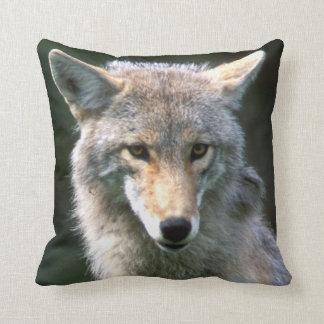 Canada, British Columbia, Coyote (Canis latrans) Cushion
