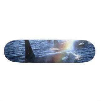Canada, British Columbia, Johnstone Straight, 18.1 Cm Old School Skateboard Deck
