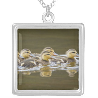 Canada, British Columbia, Kamloops, mallard 2 Silver Plated Necklace