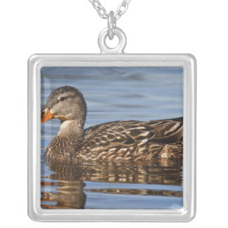 Canada, British Columbia, Kamloops, mallard Silver Plated Necklace