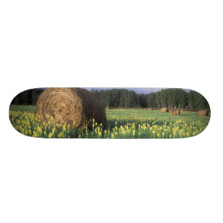 Canada, British Columbia, Kitwanga. Yellow 19.7 Cm Skateboard Deck