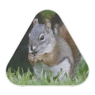 Canada, British Columbia, Red Squirrel Pine