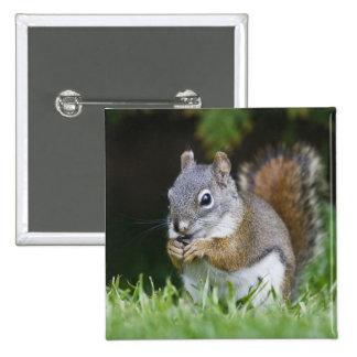 Canada, British Columbia, Red Squirrel Pine 15 Cm Square Badge