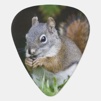 Canada, British Columbia, Red Squirrel Pine Guitar Pick