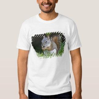 Canada, British Columbia, Red Squirrel Pine Tshirt