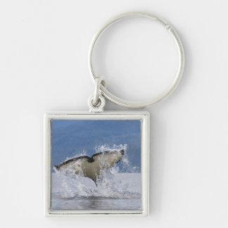 Canada, British Columbia, Vancouver Island, Silver-Colored Square Key Ring