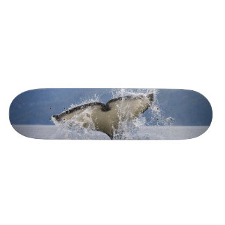 Canada, British Columbia, Vancouver Island, Skateboard Deck
