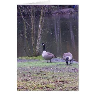 canada geese card