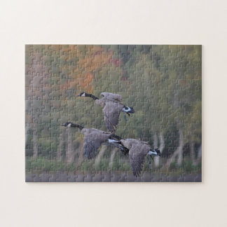 Canada geese in autumn jigsaw puzzle