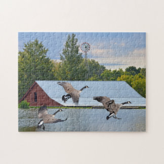 Canada Geese Landing On The Pond Jigsaw Puzzle
