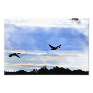 Canada geese silhouette photo art