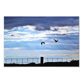 Canada geese silhouette photographic print