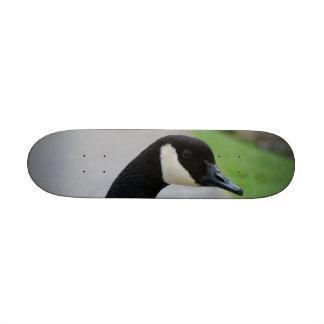 Canada goose 20 cm skateboard deck