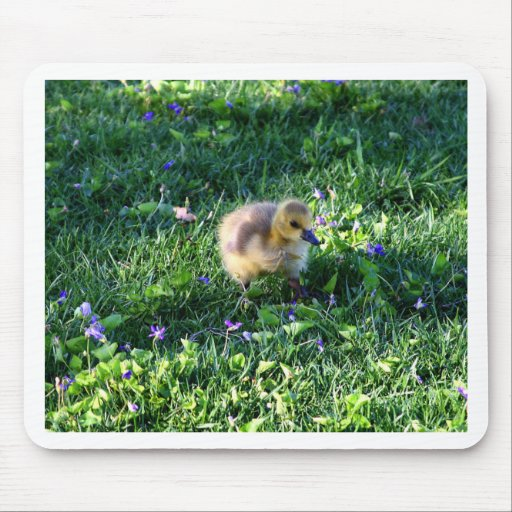 Canada Goose Chick on the Grass with Flowers Mouse Pad