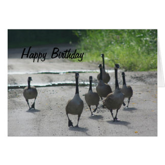 Canada Goose Family Nature Birthday Card