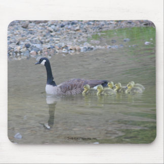 Canada Goose Mom Babies Nature Photo Mousepad