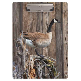 CANADA GOOSE ON BARN BOARD CLIPBOARD