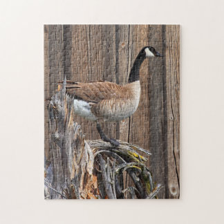 CANADA GOOSE ON BARN BOARD JIGSAW PUZZLE