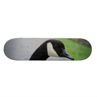 Canada goose skate decks