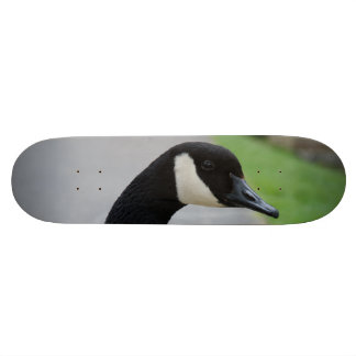 Canada goose skate deck