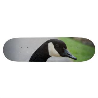 Canada goose skateboard decks