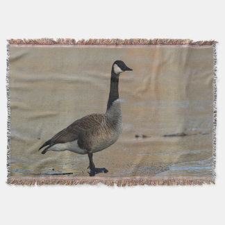 Canada goose standing on ice throw blanket
