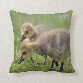 Canada Goslings Cushion