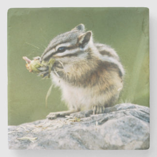 Canada, Jasper National Park, Yellow Pine Stone Coaster