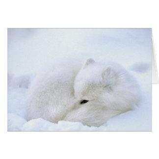 Canada, Manitoba, Churchill. Artic fox with Card