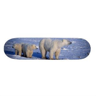 Canada, Manitoba, Churchill. Polar bear mother Custom Skate Board