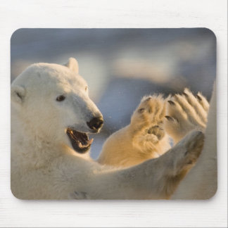 Canada, Manitoba, Hudson Bay, Churchill. 6 Mouse Pad