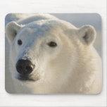 Canada, Manitoba, Hudson Bay, Churchill. 7 Mouse Pad