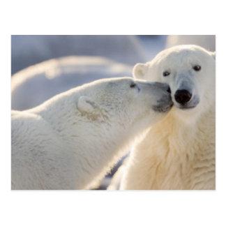 Canada, Manitoba, Hudson Bay, Churchill. Polar Postcard