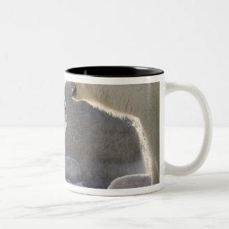 Canada, Manitoba, Hudson Bay, Churchill. Two Two-Tone Coffee Mug