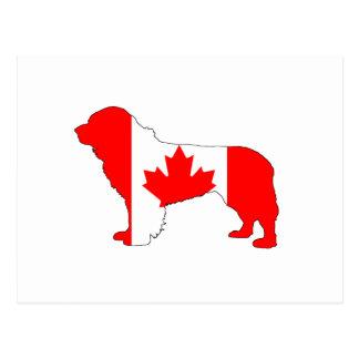 Canada Newfoundland Dog Postcard