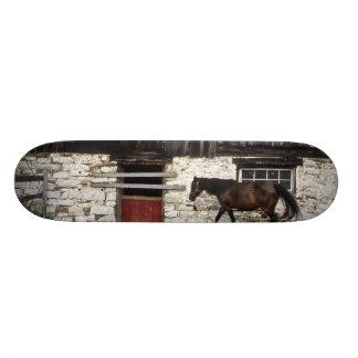 Canada: Ontario, Bruce Peninsula, Cape Chin, Custom Skate Board