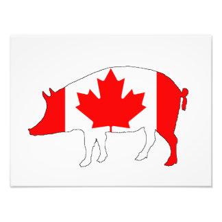 Canada Pig Photographic Print