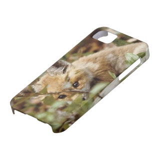 Canada, Point Pelee National Park. Young red fox iPhone 5 Cases