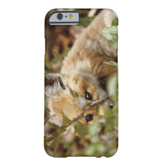 Canada, Point Pelee National Park. Young red fox iPhone 6 Case
