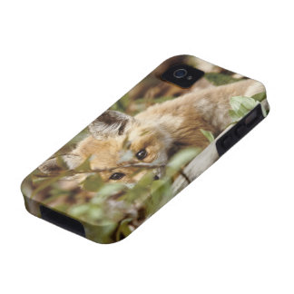 Canada, Point Pelee National Park. Young red fox iPhone 4/4S Case