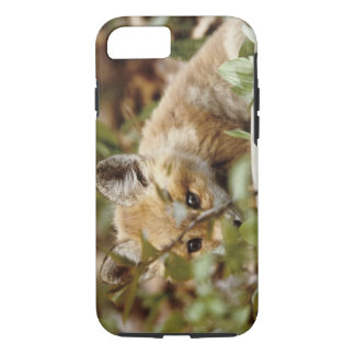 Canada, Point Pelee National Park. Young red fox iPhone 7 Case