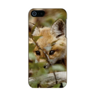 Canada, Point Pelee National Park. Young red fox Incipio Feather® Shine iPhone 5 Case