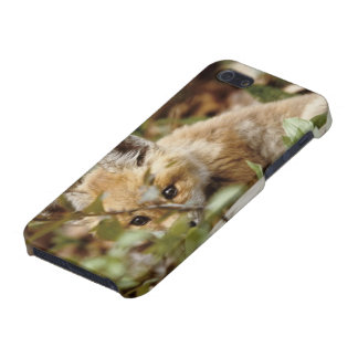 Canada, Point Pelee National Park. Young red fox iPhone 5/5S Covers